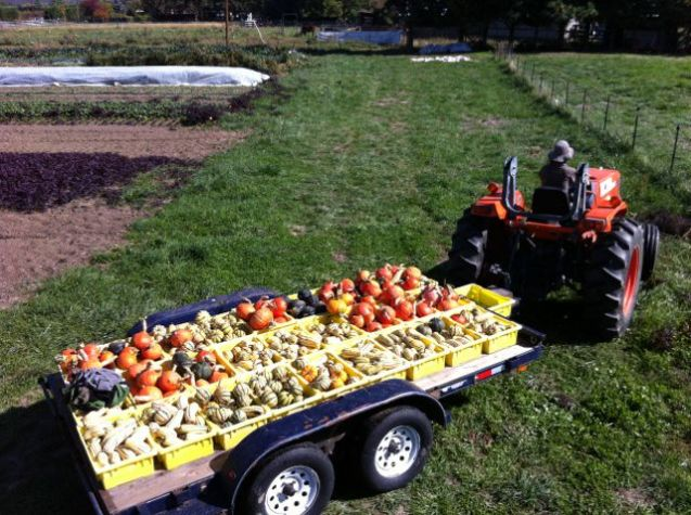 Kelly bringing in some of the winter squash harvest