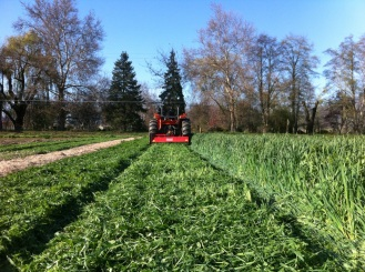 To feed and improve our soils, we grow cover crops.