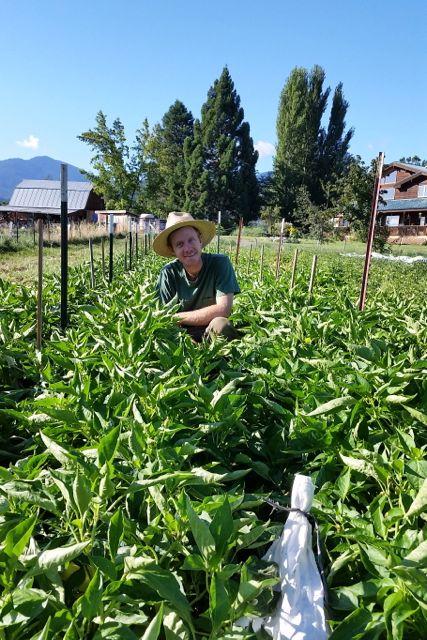 2014 Apprentice Eric in the pepper crop
