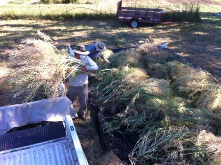 Harvest a seed crop